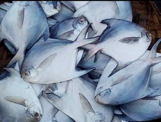 MASTER FISH COMPANY