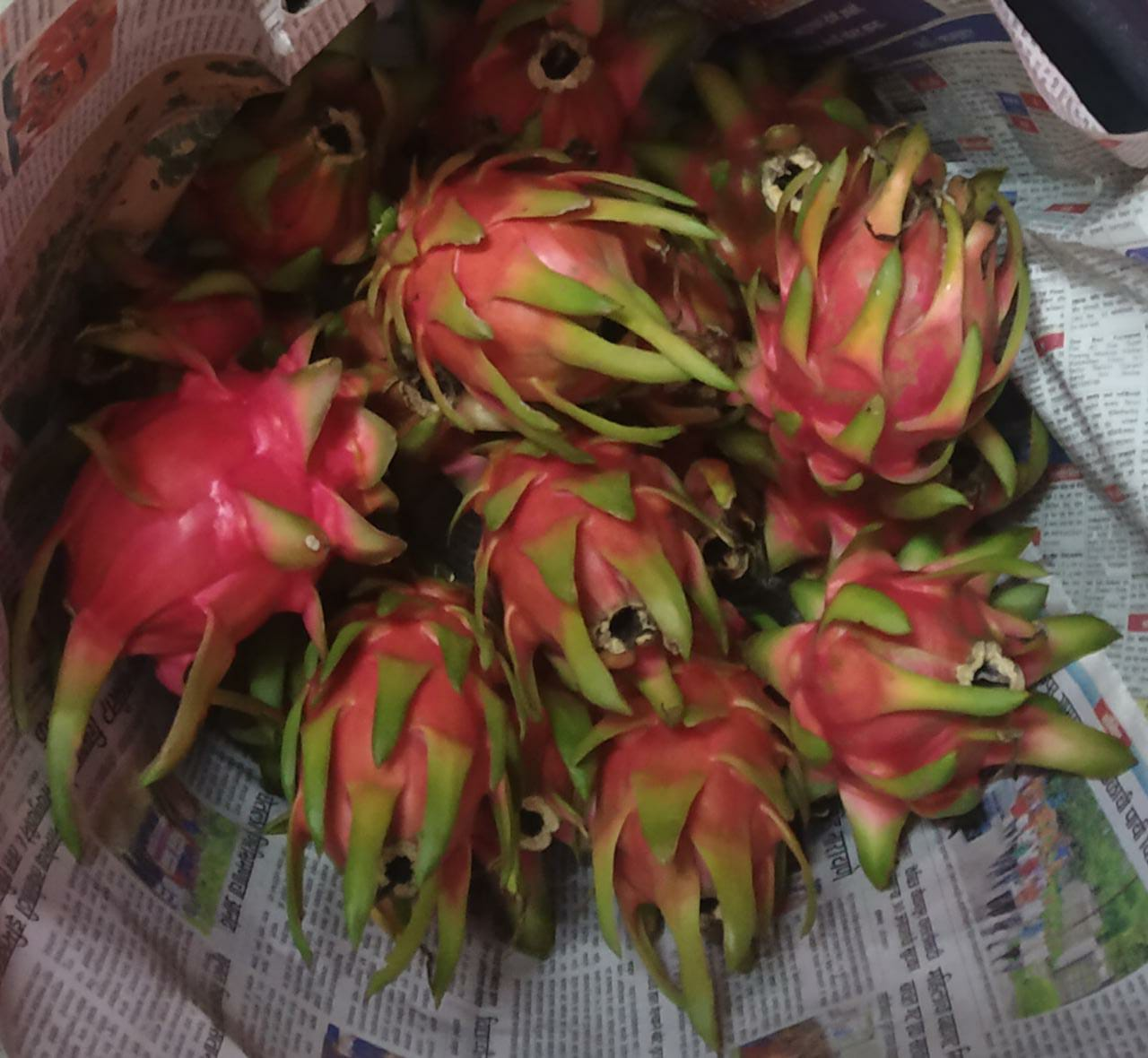 Dragun fruits
