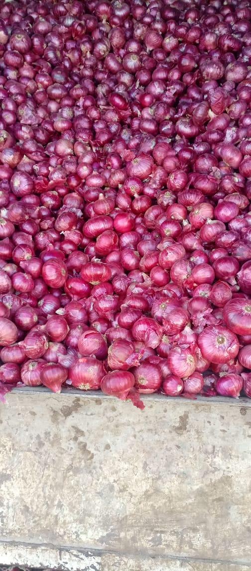 Nashik Red Onion 35mm