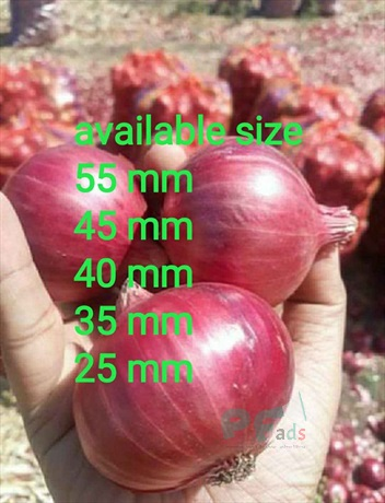 Fresh red onion size
