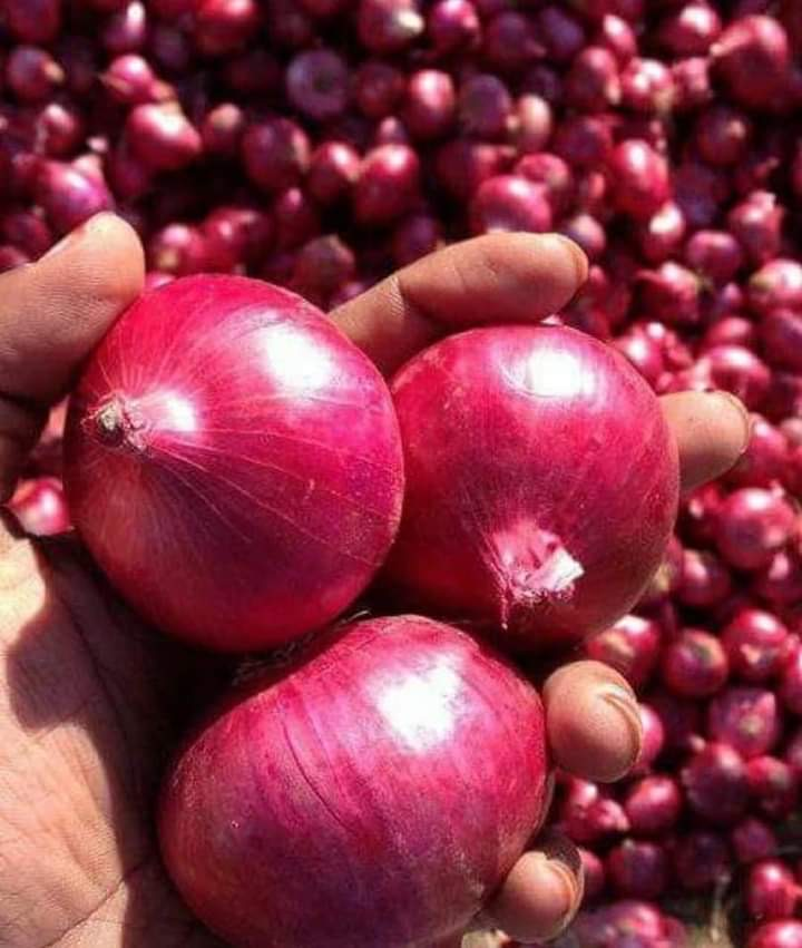 Fresh red onion small Size