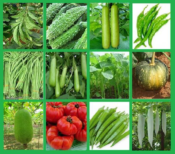 Seasonal Vegetable's