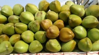 Green Fresh Coconut