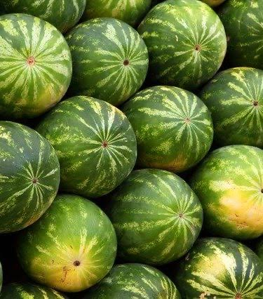 Watermelon for export