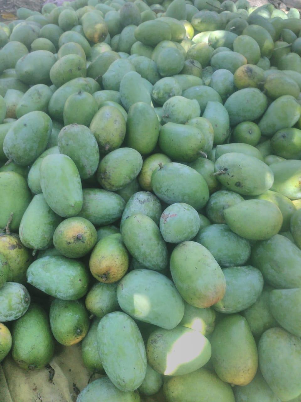 Tasty mangoes