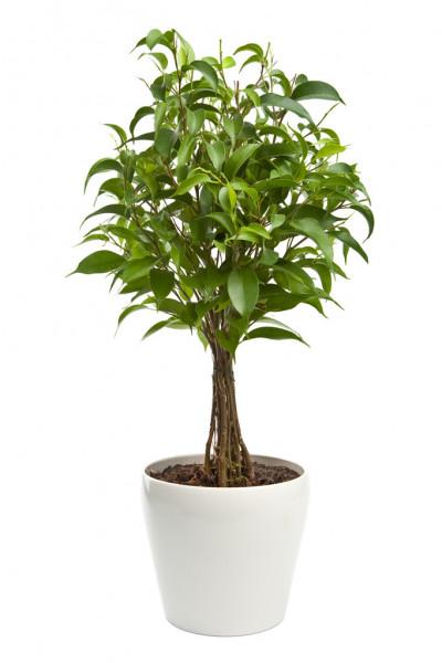 Plant / Flowers