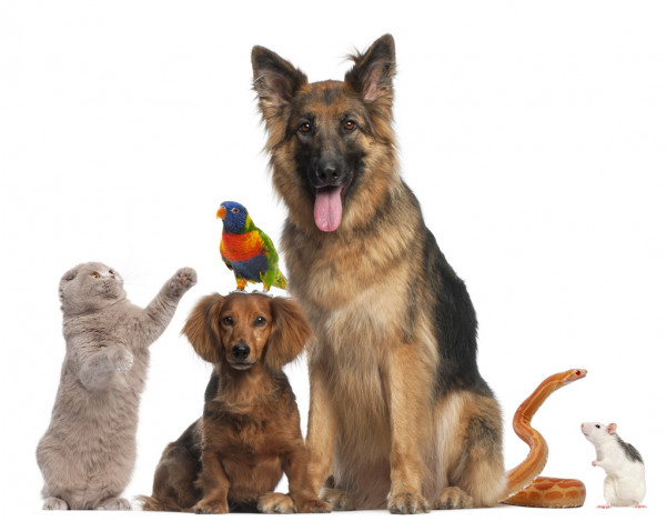 Animals /  Livestock