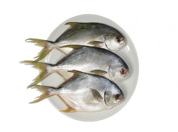Aquatic Products